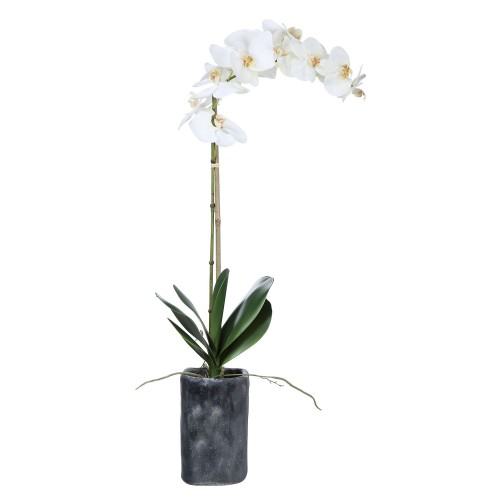 Eponine Orchid - White